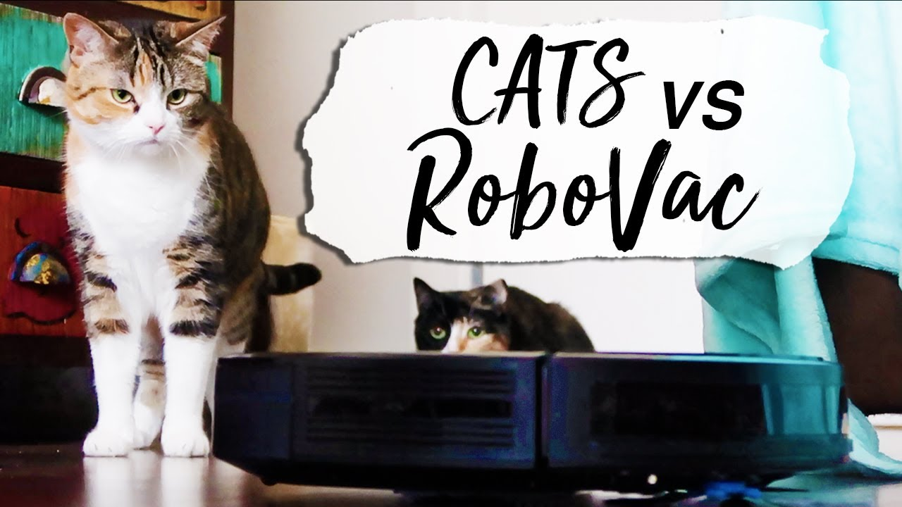 CATS VS ROBOVAC: Eufy R450 Unboxing Cute Cats React | Robot Vacuum Cleaner - First Impressions