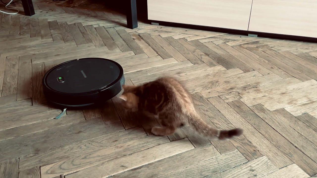 Реакция кота на робот-пылесос REDMOND RV-R650S WiFi