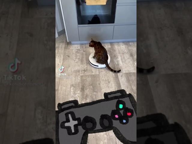 Кот и робот пылесос Кот катается на пылесосе